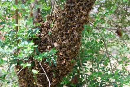 The Swarm 2012